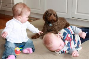 Love is a Labradoodle
