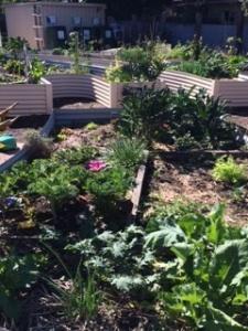 Community Garden Corbett